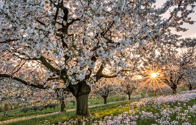 Spring in Switzerland: Top things to do